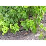 Βιολογικός λευκός οίνος ξηρός Σαντορίνη cuvee no15 750ml 3ai